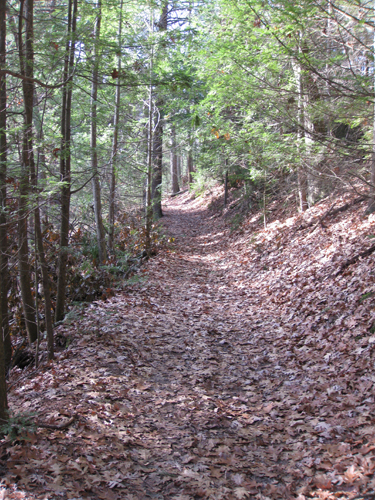 a view of a trail in Adams Woods